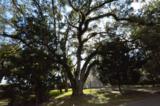 361 Pitts Bayshore Drive - Photo 26