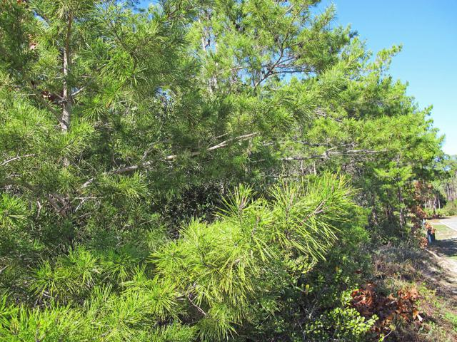 Lot 5 Charlotte Avenue, Miramar Beach, FL 32550 (MLS #814074) :: RE/MAX By The Sea