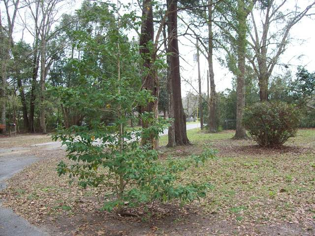0000 Davis St And North Ave, Defuniak Springs, FL 32433 (MLS #841246) :: Somers & Company