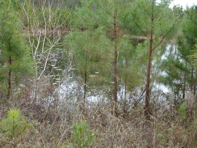 10 ACRES Mosley Rd, Defuniak Springs, FL 32433 (MLS #863172) :: Counts Real Estate on 30A