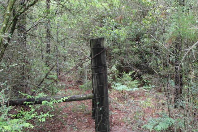5 Acres Laird Road, Mossy Head, FL 32434 (MLS #819854) :: Counts Real Estate on 30A