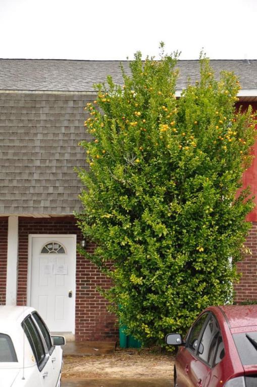 145 4Th Avenue Unit C5, Shalimar, FL 32579 (MLS #789362) :: Classic Luxury Real Estate, LLC