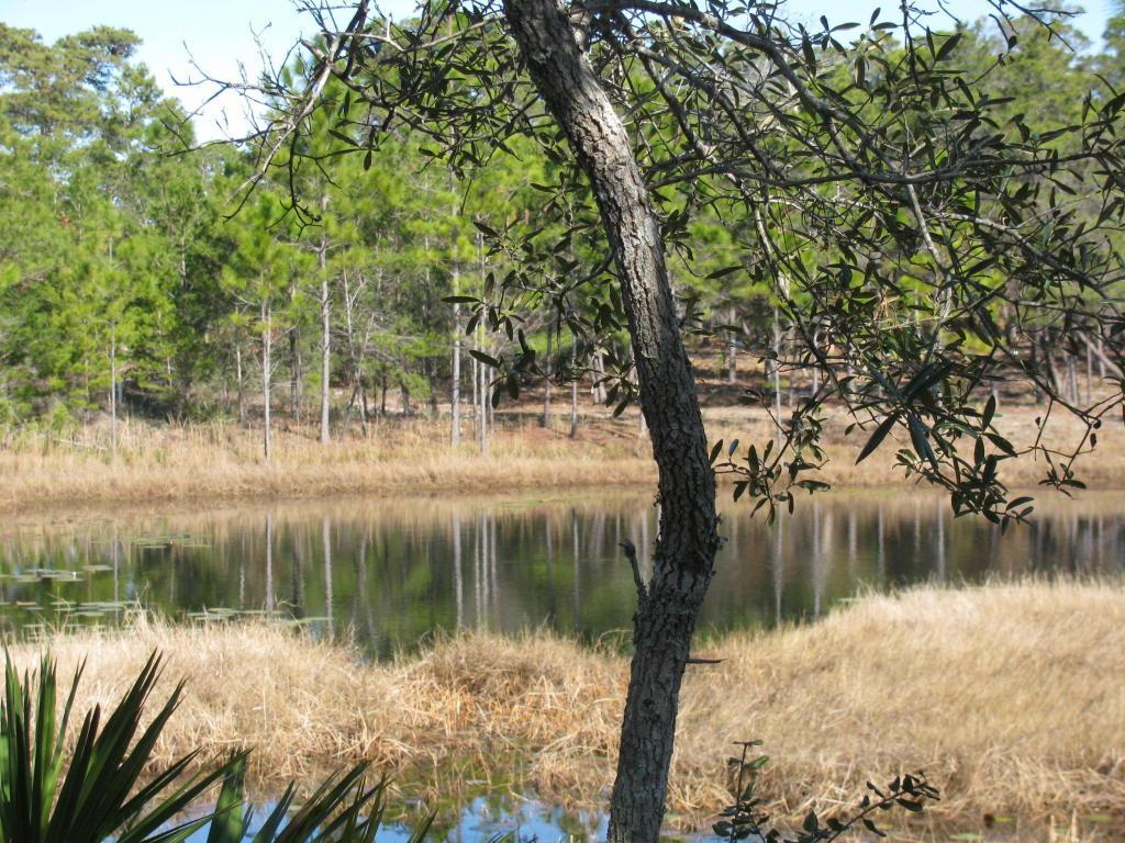 1216 Water Oak - Photo 1