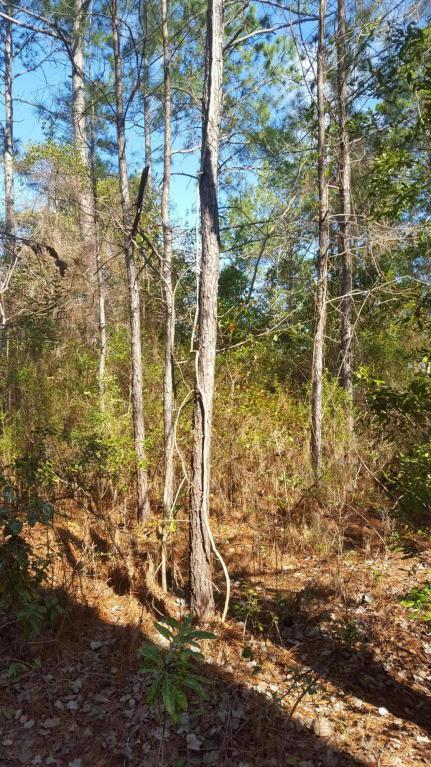 Lot 13 Bay Grove Road, Freeport, FL 32439 (MLS #797653) :: Hammock Bay