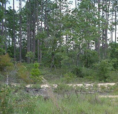 5Acres South Drive, Defuniak Springs, FL 32433 (MLS #860013) :: Berkshire Hathaway HomeServices Beach Properties of Florida