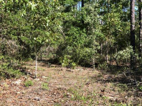 3.25 ac. Pine Cone Trail, Crestview, FL 32539 (MLS #871318) :: Better Homes & Gardens Real Estate Emerald Coast