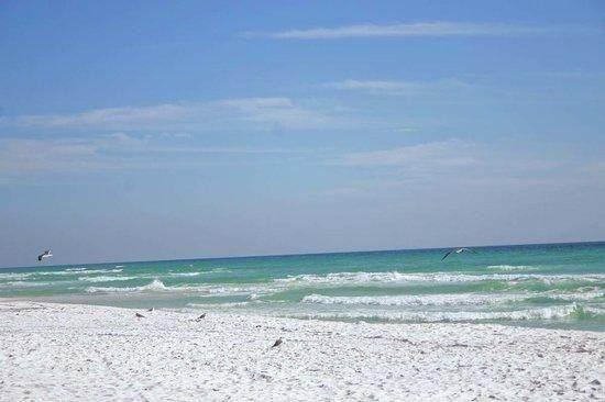 200 Sandestin Lane #309, Miramar Beach, FL 32550 (MLS #875116) :: Coastal Lifestyle Realty Group