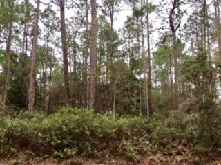 Lot #4 Daisy Drive West, Point Washington, FL 32459 (MLS #768714) :: The Premier Property Group