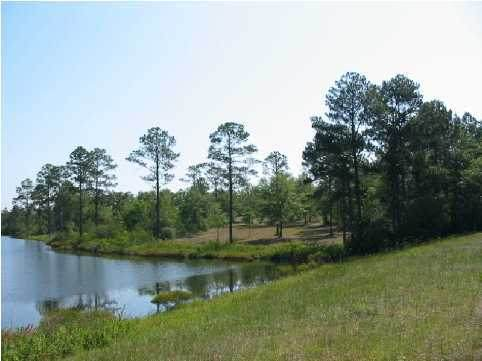 LOT 4 Magnolia Lake Drive - Photo 1