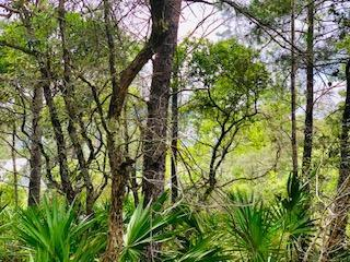 Lot 28 Hammock Lane, Santa Rosa Beach, FL 32459 (MLS #820790) :: ResortQuest Real Estate