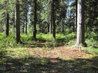 NHN Richardson Highway, Salcha, AK 99714 (MLS #133090) :: Madden Real Estate