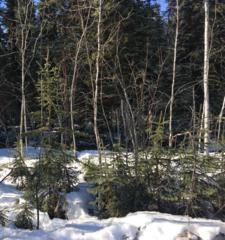 LOT 7 BLOCK 1 Long Circle, North Pole, AK 99705 (MLS #133893) :: Madden Real Estate