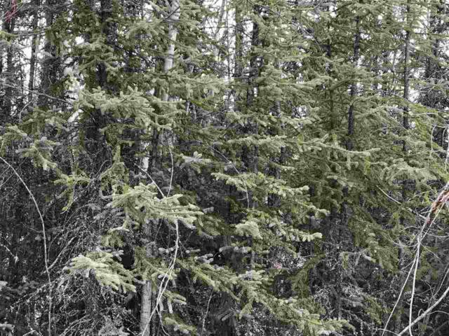 NHN Homesite Court, Salcha, AK 99714 (MLS #137126) :: Madden Real Estate