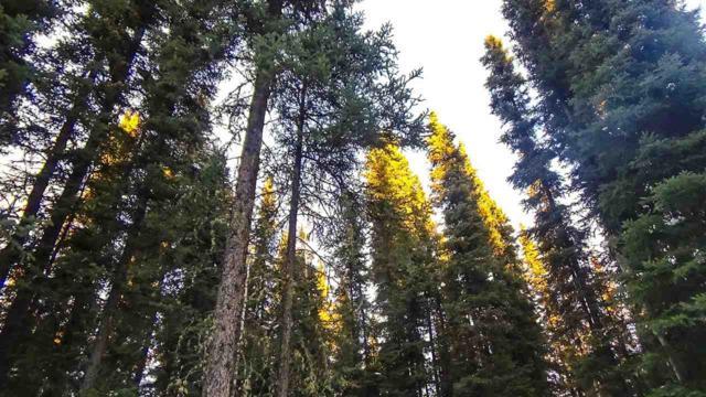 2556 Livingston Loop, Fairbanks, AK 99709 (MLS #137899) :: Madden Real Estate