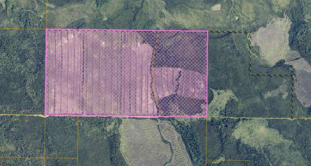 NHN Harding Lake, Salcha, AK 99714 (MLS #138105) :: Madden Real Estate