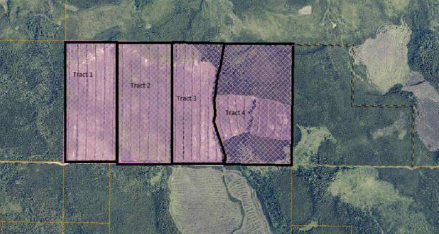NHN Harding Lake, Salcha, AK 99714 (MLS #138107) :: Madden Real Estate