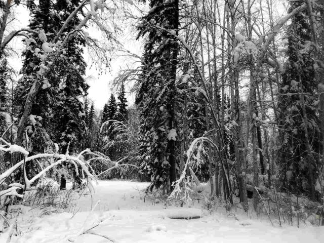 NHN Hoselton Road, Fairbanks, AK 99709 (MLS #139655) :: Powered By Lymburner Realty