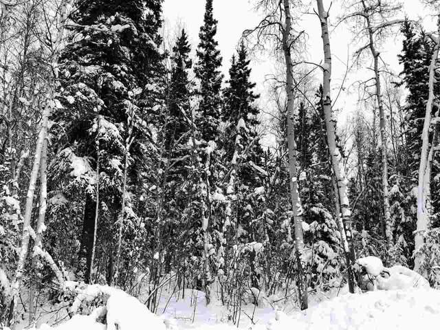 2100 Tribulation Trail, Fairbanks, AK 99709 (MLS #143074) :: Powered By Lymburner Realty