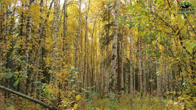 L4 B1 None Assigned, Fairbanks, AK 99712 (MLS #147345) :: Powered By Lymburner Realty