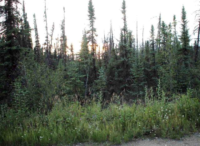3394 Her Street, North Pole, AK 99705 (MLS #127528) :: Madden Real Estate