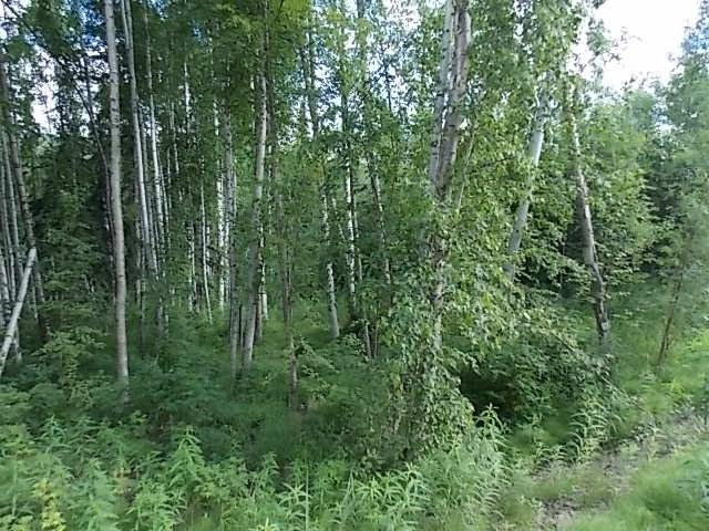 3420 Hillary Avenue, Fairbanks, AK 99709 (MLS #137860) :: Madden Real Estate