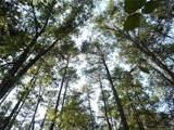 1106 Pineside Trail - Photo 1