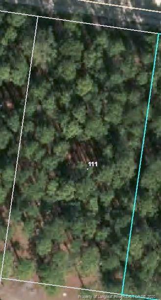 111 Pine Oak - Photo 1