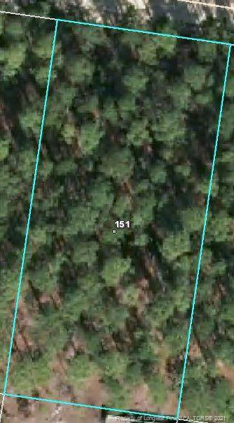 151 Pine Oak - Photo 1