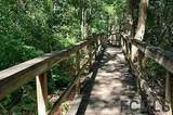 5 Stone Quarry Trail - Photo 42