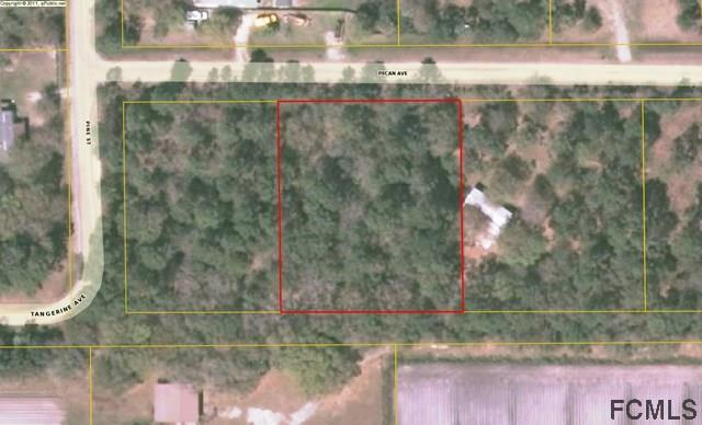 5097 Pecan Ave, Bunnell, FL 32110 (MLS #242191) :: RE/MAX Select Professionals