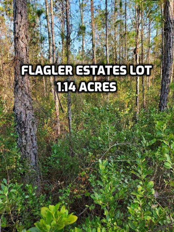10300 Erickson Avenue, Hastings, FL 32145 (MLS #265110) :: Noah Bailey Group