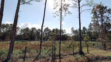 4425 Benedict St, Hastings, FL 32145 (MLS #271837) :: Keller Williams Realty Atlantic Partners St. Augustine