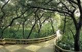 10520 Amiata Way - Photo 25