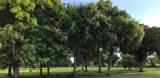 3810 Fort Denaud Road - Photo 6