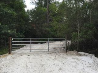 12450 Blasingim Rd, Fort Myers, FL 33966 (MLS #216024368) :: The New Home Spot, Inc.