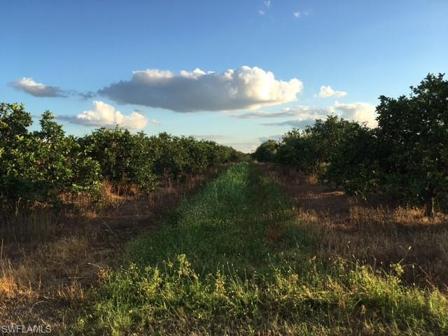 5500 1st Rd, Labelle, FL 33935 (MLS #218068499) :: The New Home Spot, Inc.