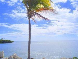 5960 Peninsular Avenue #102, Stock Island, FL 33040 (MLS #578508) :: Jimmy Lane Real Estate Team