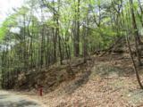 1317 Coachwhip Trail - Photo 20