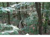 0 Whitetail Drive - Photo 2