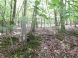 3208 Crippled Oak Trail - Photo 1