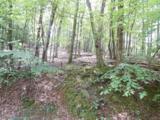 3208 Crippled Oak Trail - Photo 2