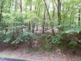 3208 Crippled Oak Trail - Photo 3