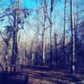 5694 Cool Springs Road - Photo 1