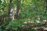 17 Etowah Trail - Photo 10