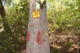 17 Etowah Trail - Photo 18