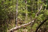 17 Etowah Trail - Photo 19