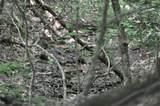 2144 Crested Fern Lane - Photo 7