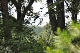 870 Nashoba Trail - Photo 2