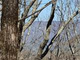 132 Black Bear Ridge - Photo 5