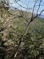 1379 Foxhound Trail - Photo 5